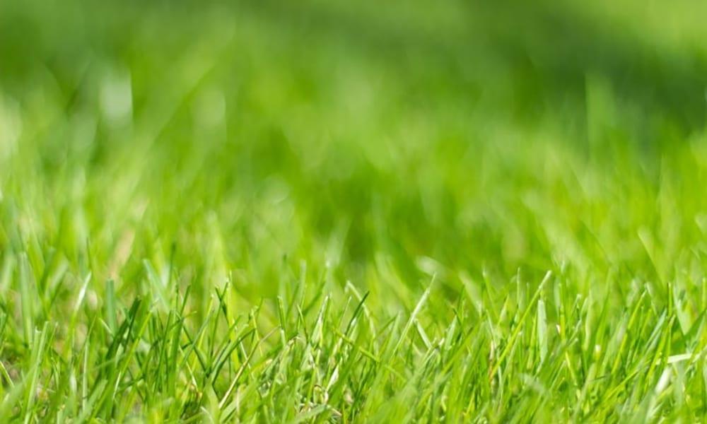 gras bij nieuwsbericht grasmaand snelwandelwedstrijd